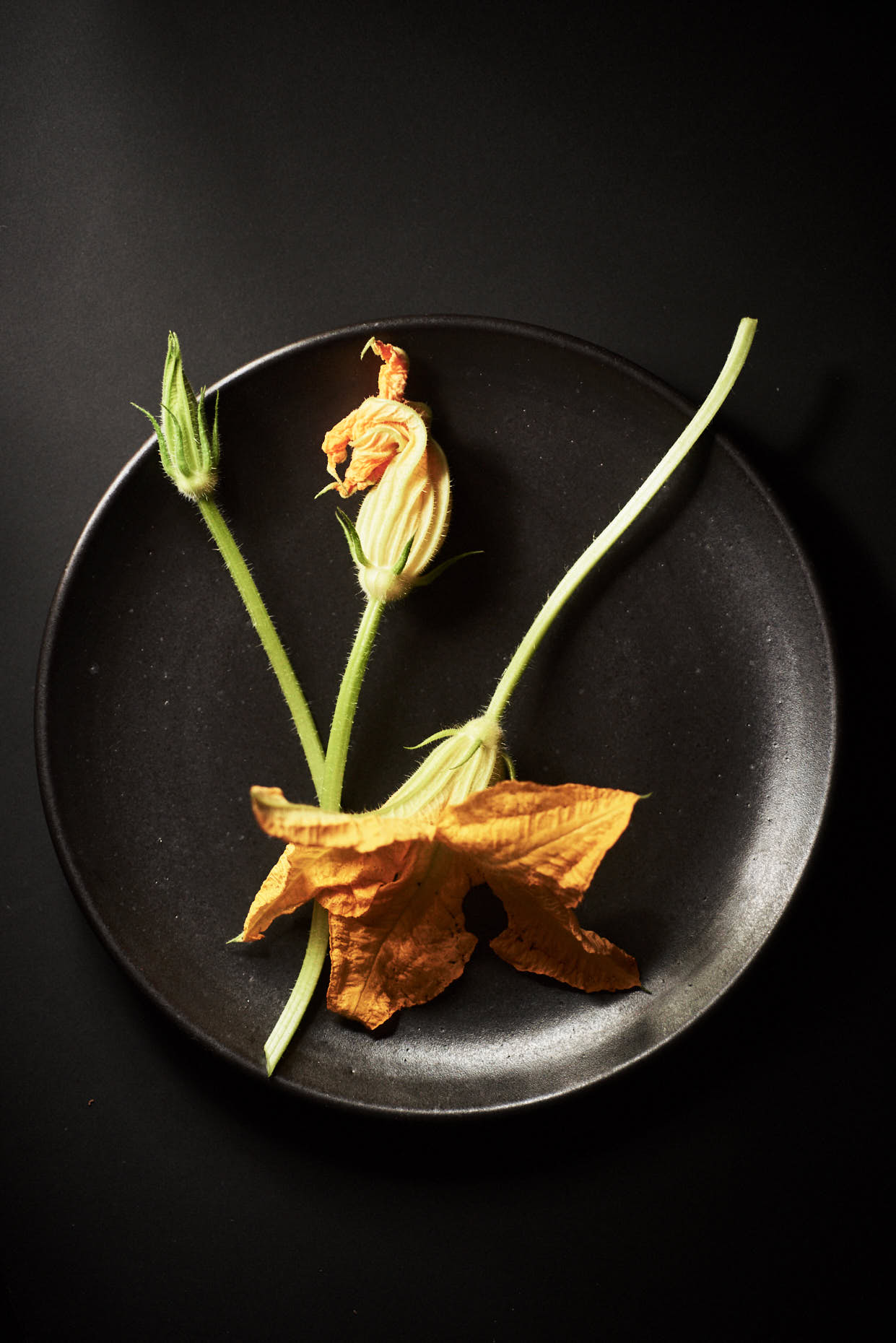 Jennifer-May-NYC-Food-Photographer-squash-blossoms