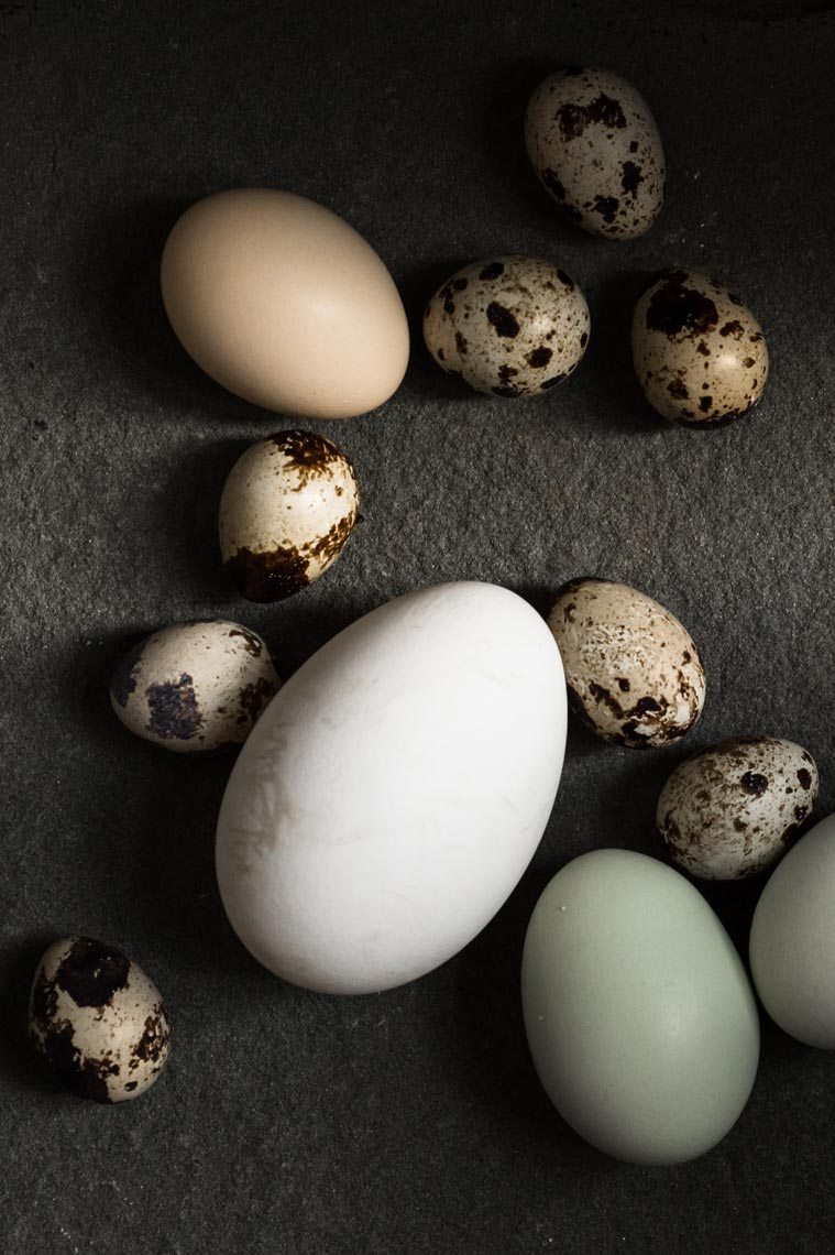 NYC Food Photographer Jennifer May Quail Duck Chicken Eggs