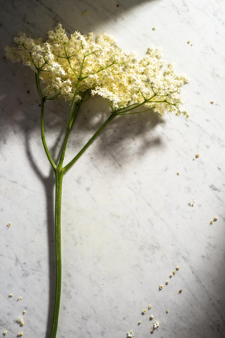 Elderflowers Foraging NYC Food Photographer Jennifer May