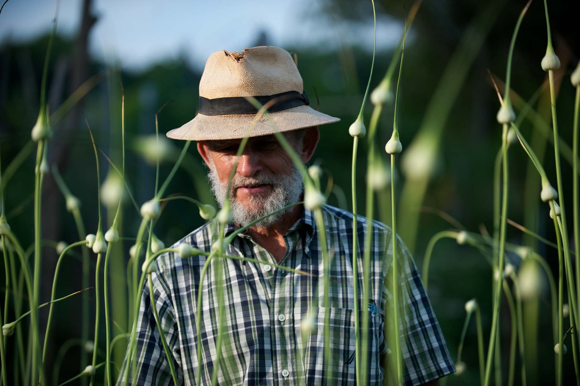 Farmer with garlic scapes