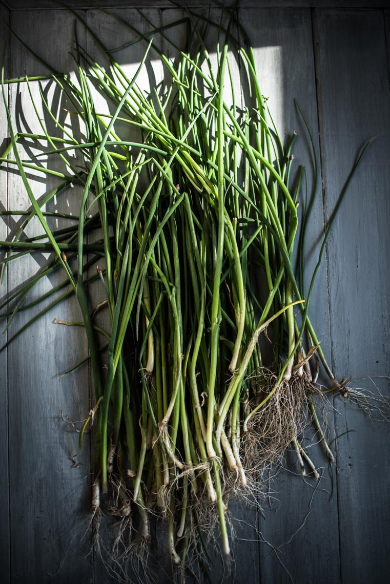 Hudson Valley Food Photograph Garden Scallions Jennifer May