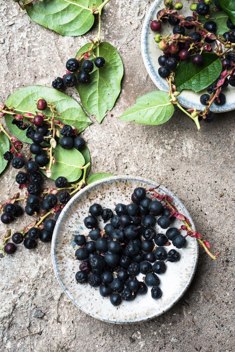 Salal Berries Food Photography Pacific Northwest Jennifer May