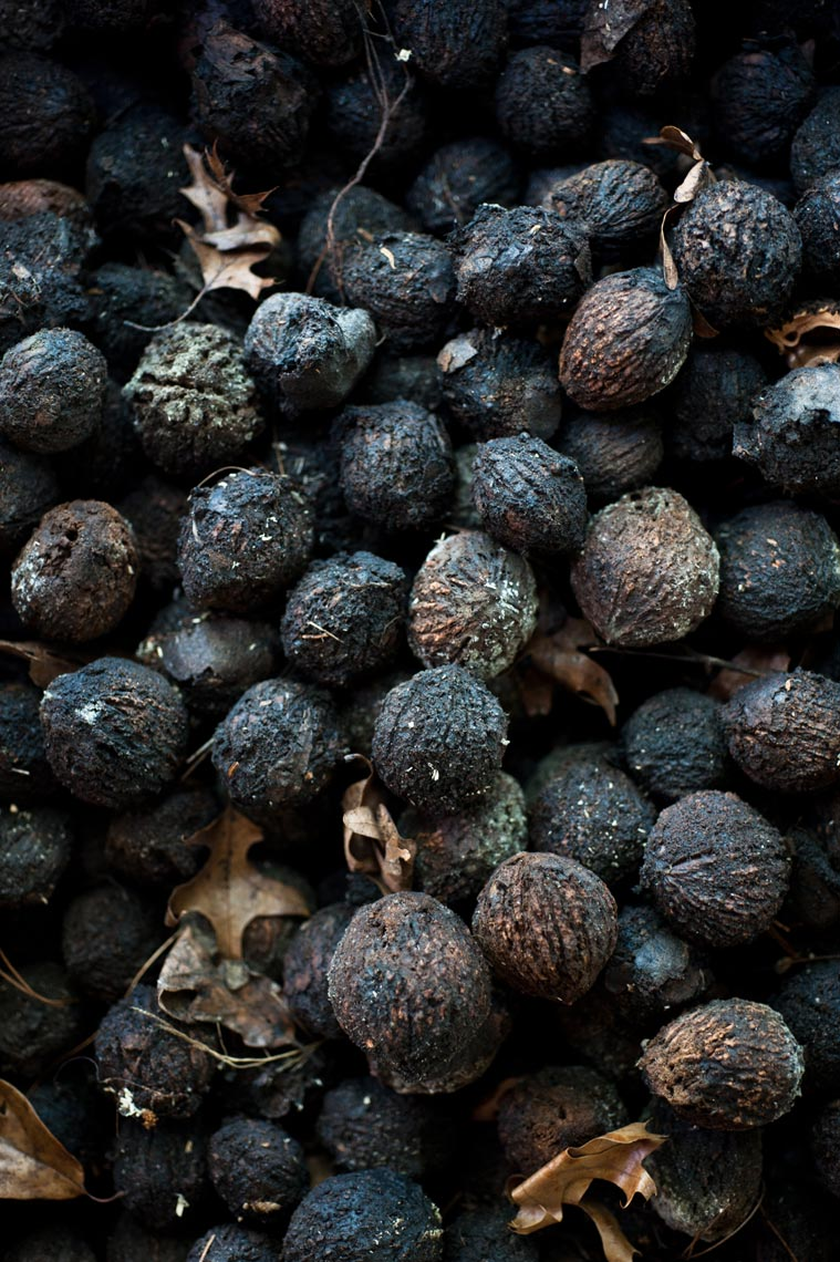 Wild Black Walnuts NYC Food Photographer Jennifer May